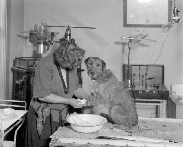 CVA 99-3465 - Dr. [Trevellyn] Sleeth's [Veterinary] Hospital [688 Seymour Street] - Operation on Dog 1923 S Thomson