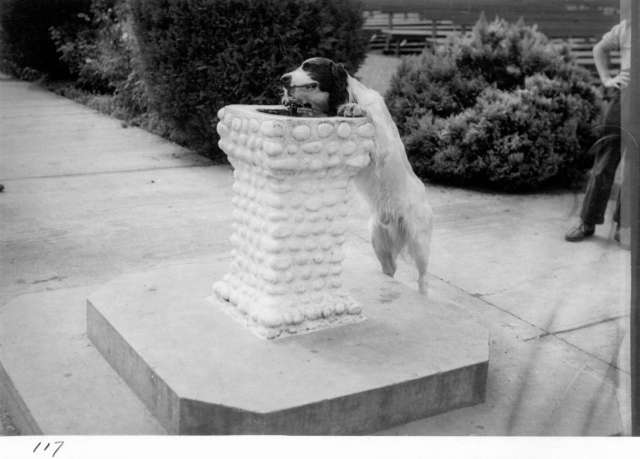 CVA 180-3647 - Dog drinking from water fountain 194- PNE